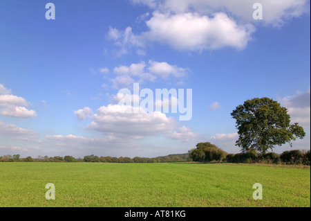 Green field landscape under blue cloudy sky on a sunny day - Stock Photo