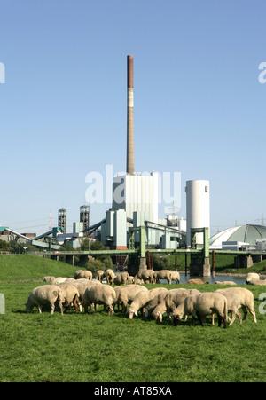 DEU, Germany, Duisburg : Coal mine and power station Zeche Walsum - Stock Photo