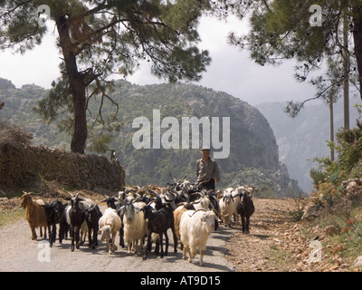 Turkish goatherd near Yerselek on Kavak Mountain Mugla Province Anatolian region of south western Turkey ancient - Stock Photo