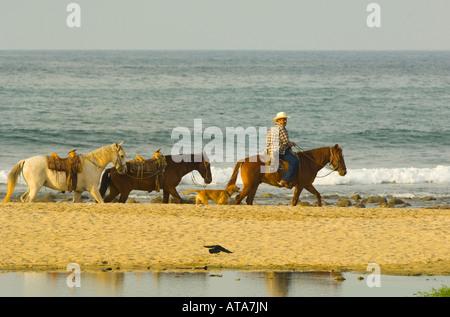 Mexico Rivera Nayarit Village of Sayulita near Puerto Vallarta on the Pacific Ocean Mexican cowboy trailing horses - Stock Photo