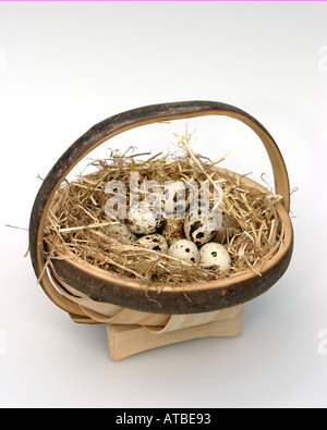 Country living. Celebrations with a hay lined trug, full of fresh quail eggs - Stock Photo