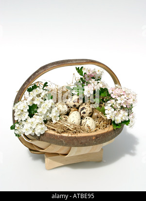 Country living. Celebrations for Easter and Spring with a hay lined basket  full of quail eggs and hawthorn blossom. - Stock Photo