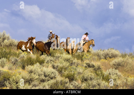 cowgirl and cowboy with horses, USA, Oregon - Stock Photo