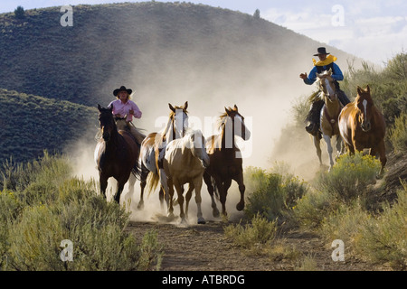 cowgirl and cowboys with horses, USA, Oregon - Stock Photo