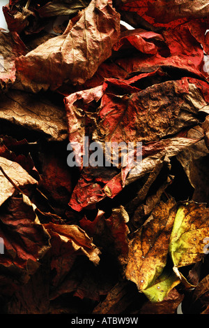 Dried autumn leaves, close-up, full frame - Stock Photo
