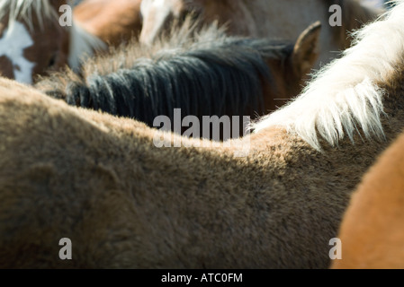 Horses side by side, cropped view, full frame - Stock Photo
