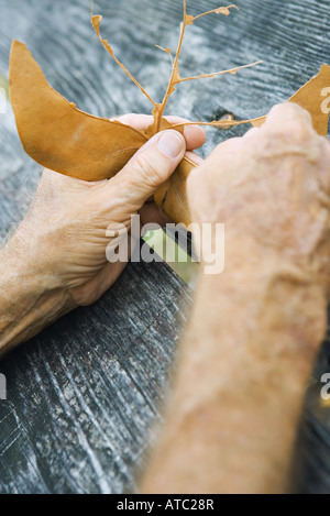 Hands tearing leaf, cropped view, close-up - Stock Photo