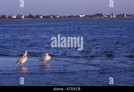 Walvis Bay main harbour town in Namibia The lagoon is Namibias most important wetland with flamingos and rare white - Stock Photo