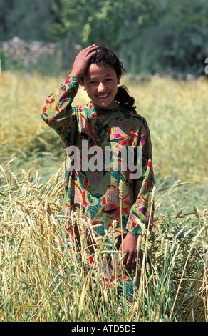 Young Pakistani woman in her fields of barley Sust near the Chinese border N Pakistan - Stock Photo