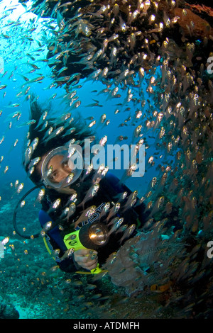 Scuba diving in Indonesia coral reefs, underwater, diver, female diver, ocean, sea, glass fish, blue water, marine - Stock Photo