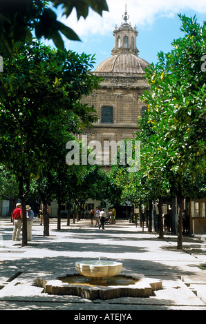 People in the tree lined Patio de los Naranjos the old ablutions court yard of the former mosque Seen through trees - Stock Photo