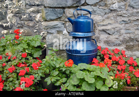 Blue milk churn and kettle ornament surrounded by Geraniums outside Tearooms in Dolgellau Gwynedd North Wales UK - Stock Photo