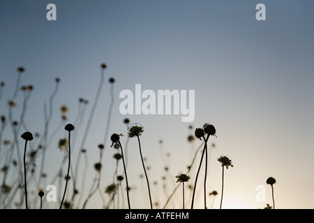 Silhouetted plants at sunset - Stock Photo