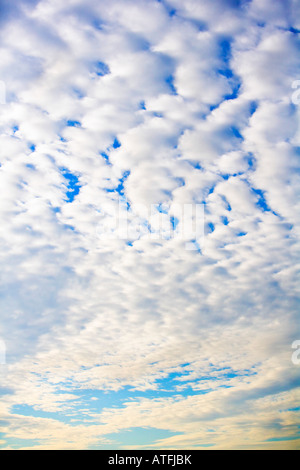 Cirrocumulus floccus Clouds at sunset - Stock Photo