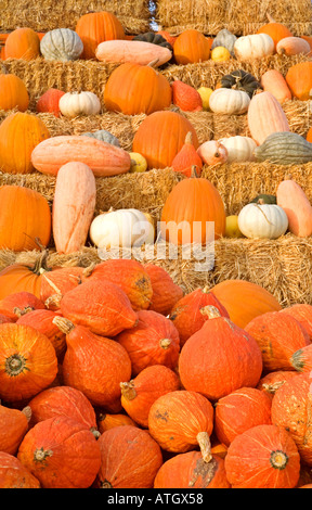 different kinds and shapes of pumpkins displayed on stepped haystacks - Stock Photo
