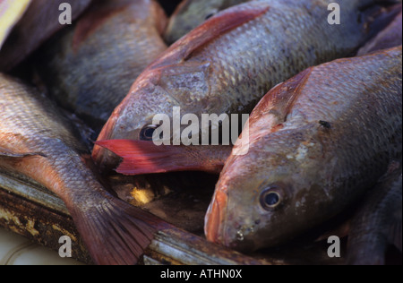 Fresh caught red snapper (Huachinango) fish arranges to be sold in a local market in Puerto Escondido, Mexico - Stock Photo