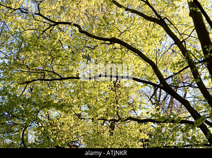 Leaves and trees lit from behind by the sun - Stock Photo