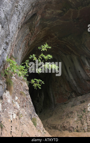 Entrance to Thor's cave near Wetton Mill in the Manifold valley, Staffordshire, England - Stock Photo