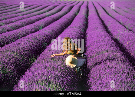 Woman with hat and basket in lavender field in Provence France - Stock Photo