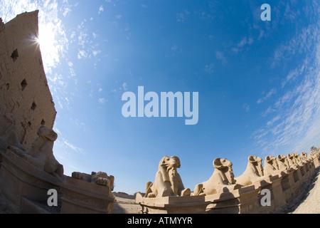 Ram-headed sphinx avenue Temple of Karnak Luxor Egypt North Africa - Stock Photo