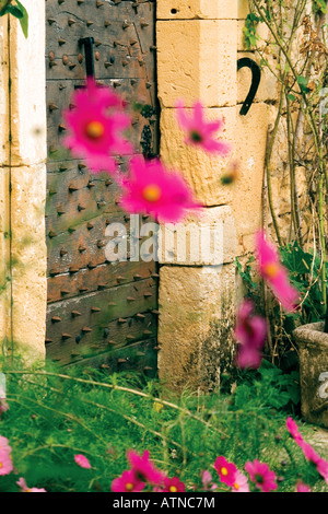 Pink cosmos flowers in front of an old studded wooden door of traditional house in Dordogne, France. - Stock Photo