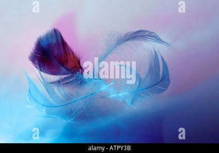 Feather / Vogelfeder - Stock Photo