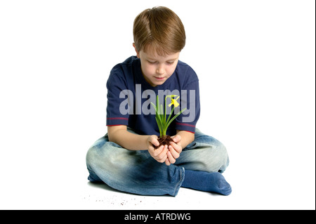 Boy sat holding a daffodil in his hands white background with a slight shadow and some dirt - Stock Photo