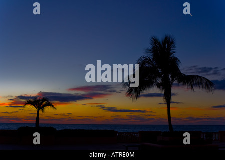 Quarter moon rising before sunrise over the Atlantic Ocean behind the silhouette of a palm - Stock Photo
