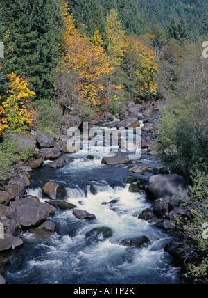 Autumn leaves border a clear icy mountain stream in the Cascade Mountains near Oakridge Oregon - Stock Photo
