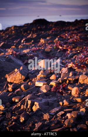 morning light on pebbles - Stock Photo