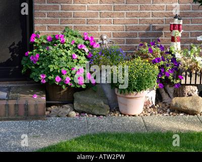 Buzy Lizzie (Impatiens walleriana), lobelias (Lobelia), petunias (Petunia) and chrysanthemums (Chrysanthemum) - Stock Photo