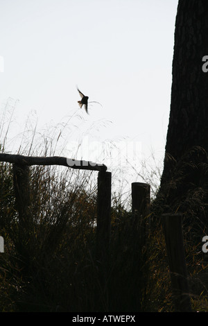 bird in woods - Stock Photo