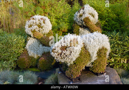 Floral display in shape of pandas on motorway roundabout in Newport South Wales UK EU - Stock Photo