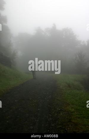 Walking in the misty mountains Flora Saddle Kahurangi National Park South Island New Zealand - Stock Photo