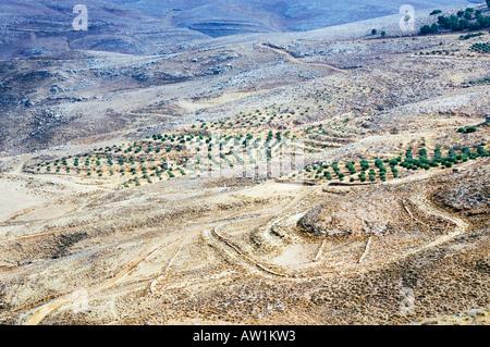 Jordan Mount Nebo near the town of Madaba valley of the river Jordan plantation - Stock Photo