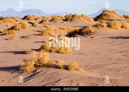 Chile Atacama  Desert wire grass sand dunes Andes mountains background empty no people no animals dry parched - Stock Photo
