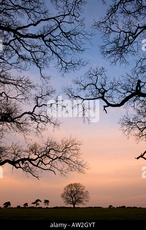 Trees and branches in the New Forest National Park, Hampshire - Stock Photo