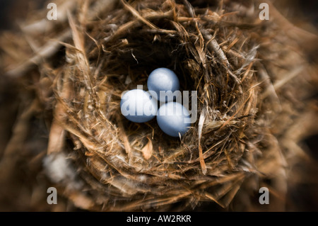 threesmall bird eggs in nest selective focus special effect - Stock Photo