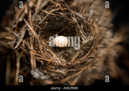 single small bird eggs in nest selective focus special effect - Stock Photo