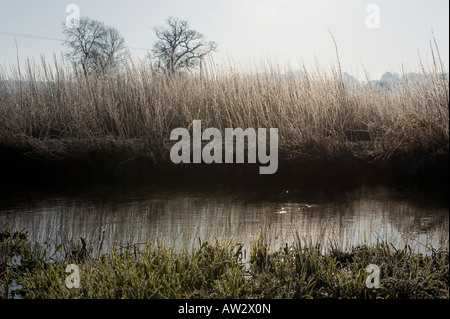 A winter morning on the River Avon in Wiltshire - Stock Photo