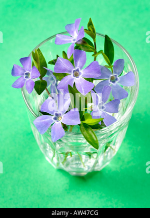 A glass containing periwinkle flowers on a green background. - Stock Photo