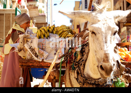 Trader, unloading off donkey cart   vegetables for the stall holders in famous old souq. called Sharia el Souk in - Stock Photo