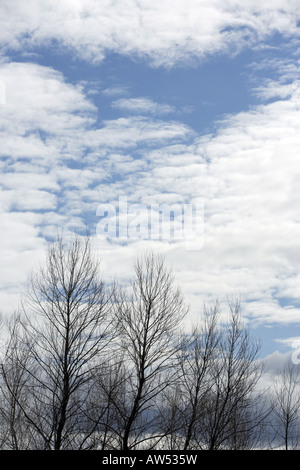 Trees in the clouds in winter - Stock Photo