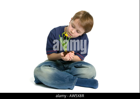 A young boy sat crossed legs looking at a daffodil he s holding in his hands shot against a white background - Stock Photo
