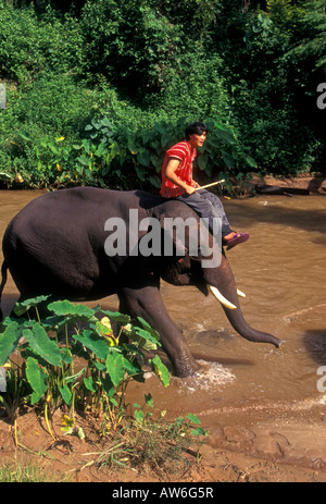 Thai man, mahout riding elephant, working animal, Mae Sa Elephant Camp, Chiang Mai, Chiang Mai Province, Thailand, - Stock Photo
