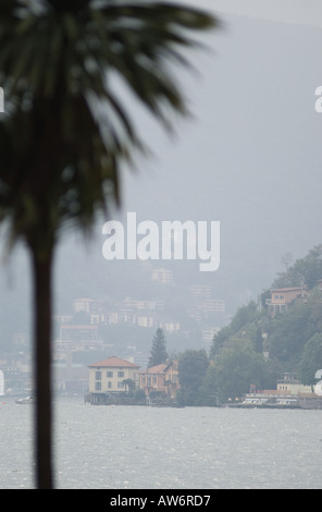 A palm tree on the shore of Lake Lugano in the Canton of Ticino in Switzerland. - Stock Photo
