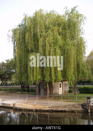 weeping willow overshadowing lock keepers hut - Stock Photo