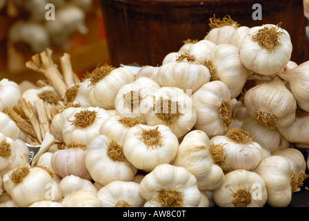 fresh garlic bulbs and cloves on sale and displayed for purchase at the garlic festival on the isle of wight newchurch - Stock Photo