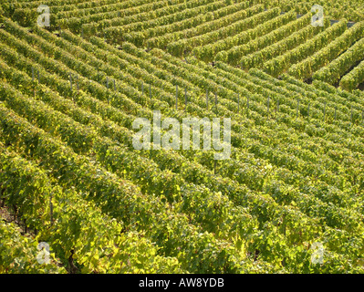 AJD47719, Switzerland, Europe, Vaud, Aigle - Stock Photo