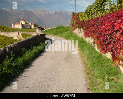 AJD47734, Switzerland, Europe, Vaud, Aigle - Stock Photo